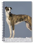 Hungarian Greyhound Spiral Notebook