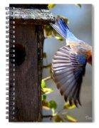 Img_1414-003 - Eastern Bluebird Spiral Notebook