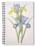 Iris Xiphium Spiral Notebook