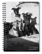 Italian Greyhounds In Black And White Spiral Notebook