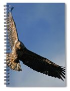 Juvenile Bald Eagle Spiral Notebook