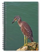 Juvenile Black Crowned Night Heron Spiral Notebook