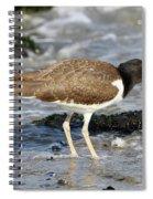 Juvenile Oystercatcher Spiral Notebook