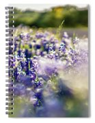 Lavender Purple Flower Blooming On Side Road In Texas At Sunset Spiral Notebook