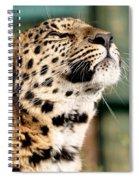 Leopard Spiral Notebook