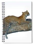 Leopard Panthera Pardus Sitting Spiral Notebook