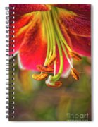 Lily Abstract Spiral Notebook
