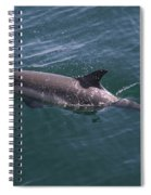 Long-beaked Common Dolphins In Monterey Bay 2015 Spiral Notebook