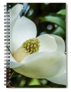 Magnolia Bloom IIi Spiral Notebook
