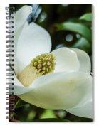 Magnolia Bloom IIi Spiral Notebook