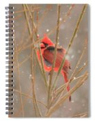 Male Northern Cardinal In Winter Spiral Notebook