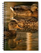 Mallards Swimming In The Water At Magic Hour Spiral Notebook