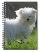 Maltese Spiral Notebook