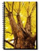 Maple Tree Portrait 2 Spiral Notebook