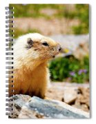Marmot On Mount Massive Colorado Spiral Notebook
