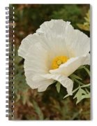 Matilija Poppy I Spiral Notebook