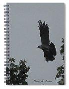 Mississippi Kite In Flight Spiral Notebook