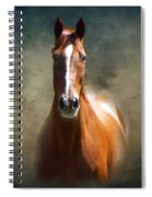 Misty In The Moonlight P D P Spiral Notebook