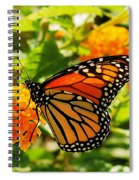 Monarch Spiral Notebook