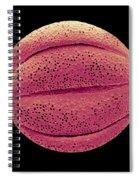 Monarda Didyma Pollen Grains, Sem Spiral Notebook