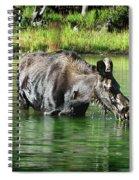 Moose In The Elk Creek Beaver Ponds Spiral Notebook
