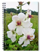 Moth Mullein Wildflowers - Verbascum Blattaria Spiral Notebook