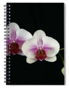 Moth Orchid 3 Spiral Notebook