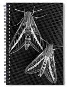 Moths Spiral Notebook