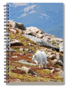 Mountain Goats On Mount Bierstadt In The Arapahoe National Forest Spiral Notebook