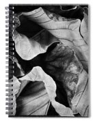 Mounts Botanical Garden 2363 Spiral Notebook