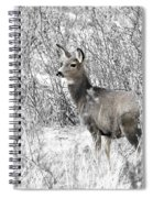 Mule Deer In Winter In The Pike National Forest Spiral Notebook