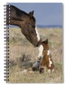Mustang Mare And Foal Spiral Notebook