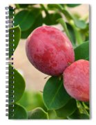 Natal Plums On Branch Spiral Notebook