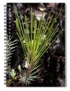 New Growth Spiral Notebook