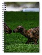 Newborn Elk Spiral Notebook