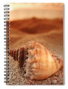 North Shore Seashell Spiral Notebook