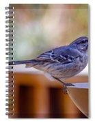 Northern Mockingbird Spiral Notebook