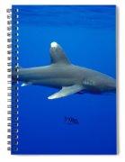 Oceanic Whitetip Shark Spiral Notebook