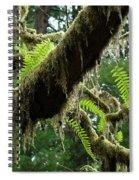 Office Art Forest Ferns Green Fern Giclee Prints Baslee Troutman Spiral Notebook