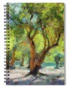 Olive Grove Spiral Notebook