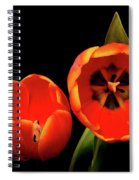 Orange Tulip Macro Spiral Notebook
