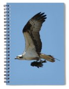 Osprey With Fish Spiral Notebook