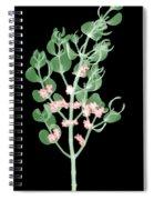 Pacific Mistletoe, Phoradendron Spiral Notebook