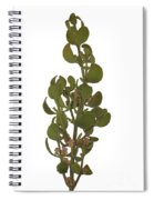 Pacific Mistletoe Spiral Notebook