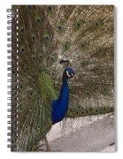 Peacock Close-up Spiral Notebook