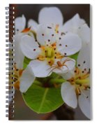 Pear Blossoms Spiral Notebook