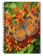 Pearly Crescentspot Butterfly Spiral Notebook