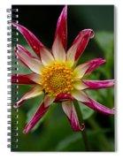 Peppermint Sunburst Spiral Notebook