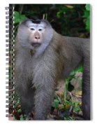 Pig-tailed Macaque Spiral Notebook