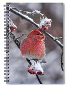 Pine Grosbeak Spiral Notebook